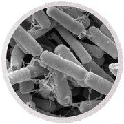 Bacillus Thuringiensis Bacteria Round Beach Towel