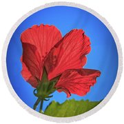 Back Lighting The Red Hibiscus  Round Beach Towel