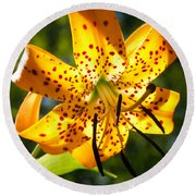 Back-lit Yellow Tiger Lily Round Beach Towel