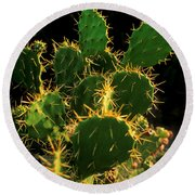 Backlit Cacti Round Beach Towel