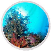 Backlit Coral Round Beach Towel