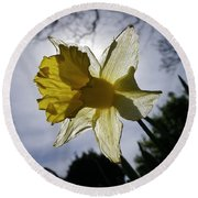 Backlit Daffodil Round Beach Towel