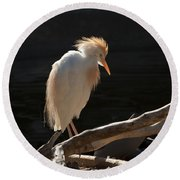 Backlit Egret Round Beach Towel