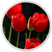 Backlit Red Tulips Round Beach Towel
