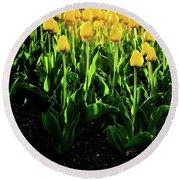 Backlit Tulips Round Beach Towel