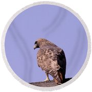 Backside Of A Hawk   Round Beach Towel