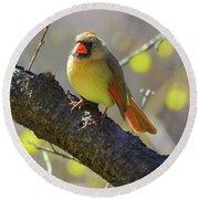 Backyard Bird Female Northern Cardinal Round Beach Towel