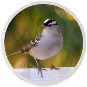 Backyard Bird - White-crowned Sparrow Round Beach Towel