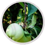 Backyard Garden Series - 2 Apples Round Beach Towel