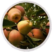 Backyard Garden Series - Apples Cluster Round Beach Towel
