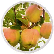 Backyard Garden Series - Apples In Apple Tree Round Beach Towel