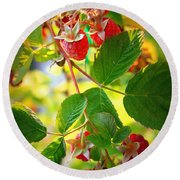 Backyard Garden Series - Sunlight On Raspberries Round Beach Towel
