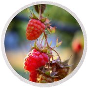 Backyard Garden Series - The Freshest Raspberries Round Beach Towel