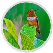 Backyard Hummingbird #22 Round Beach Towel