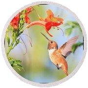 Backyard Hummingbird Series # 54 Round Beach Towel