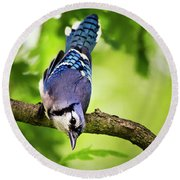 Balanced Blue Jay Round Beach Towel
