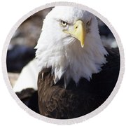 Bald Eagle 1 Round Beach Towel