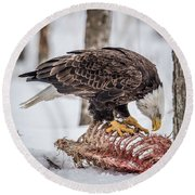 Bald Eagle At The Buffet Round Beach Towel