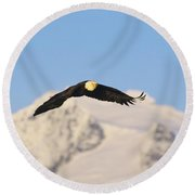 Bald Eagle Flying In Alaska Round Beach Towel