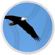 Bald Eagle IIi Round Beach Towel