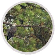 Bald Eagle In A Pine Tree, No. 4 Round Beach Towel