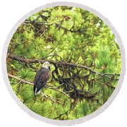 Bald Eagle In A Pine Tree, No. 5 Round Beach Towel