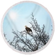 Bald Eagle In A Tree Enjoying The Sunlight Round Beach Towel