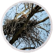 Bald Eagle In The Nest Round Beach Towel