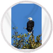 Bald Eagle In The Tree Round Beach Towel