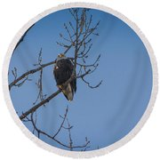 Bald Eagle In Tree Round Beach Towel