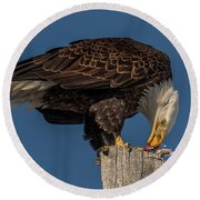 Bald Eagle Lunch Round Beach Towel