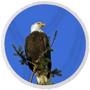 Bald Eagle On Blue Round Beach Towel