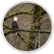 Bald Eagle On Mossy Branch Round Beach Towel
