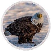 Bald Eagle Over Its Prey Round Beach Towel