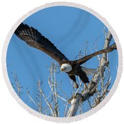Bald Eagle Shows Its Focus Round Beach Towel