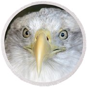 Bald Eagle Up Close Round Beach Towel