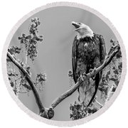 Bald Eagle Warning In Black And White Round Beach Towel