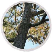 Bald Head Tree Round Beach Towel
