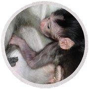 Balinese Baby Monkey Feeding Round Beach Towel