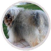 ball of fur Havanese dog Round Beach Towel
