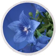 Balloon Flowers - Blooms And Buds Round Beach Towel