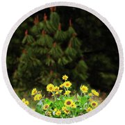 Balsamroot And Evergreen Round Beach Towel