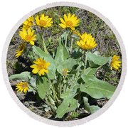 Balsamroot Round Beach Towel