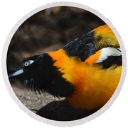 Baltimore  Oriole 2 Round Beach Towel