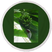 Banana Plant Kew London England Round Beach Towel