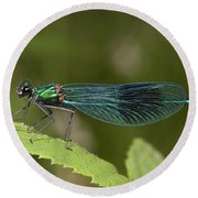 Banded Demoiselle Round Beach Towel