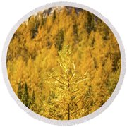 Banff Golden Larch Dream World Round Beach Towel