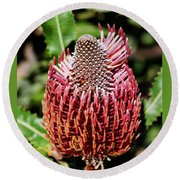 Banksia In Red Round Beach Towel