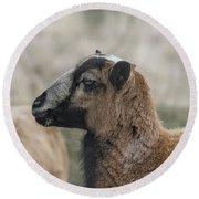 Barbados Blackbelly Sheep Profile Round Beach Towel