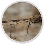 Barbed Wire Entwined With Dried Vine In Autumn Round Beach Towel